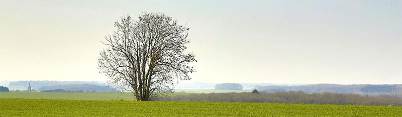 campo arbol_baja