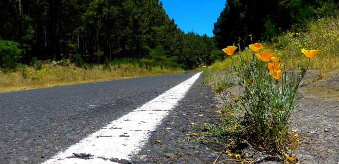 flor carretera